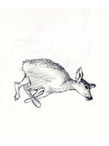Dead-deer-dtl-1
