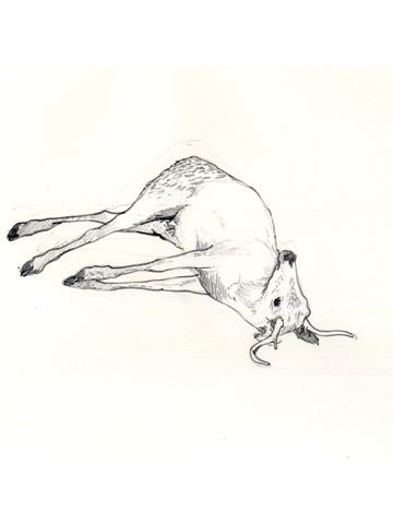 Dead-deer-dtl-7