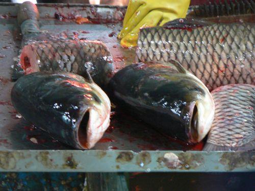 Shangha-supermarket-fish-he