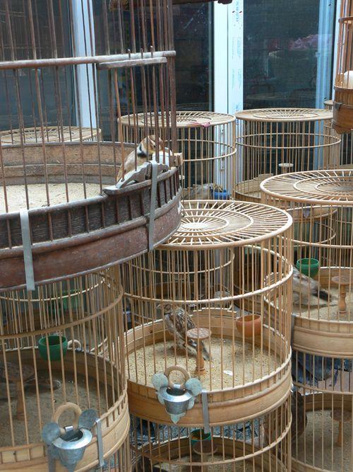 Shanghai-bird-markey