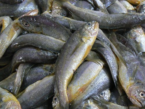 Shanghaisuper-market-fish