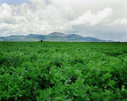 Idaho-landscape
