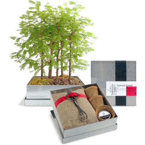 Bonsai-thumb-480xauto-8015