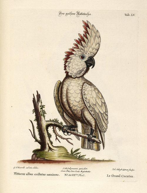 October2011lookbirdspost8