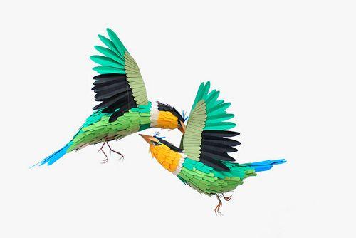Bird-5