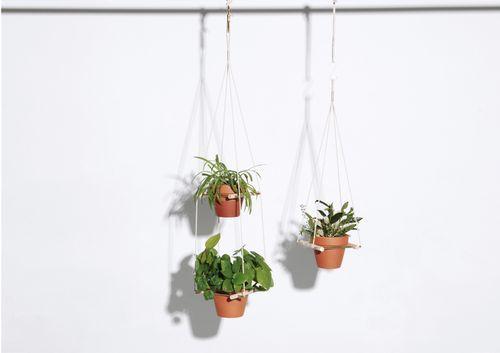 O-plants2