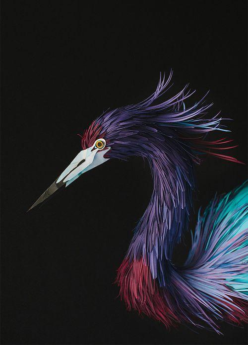 Birds-11