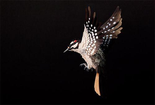 Birds-41