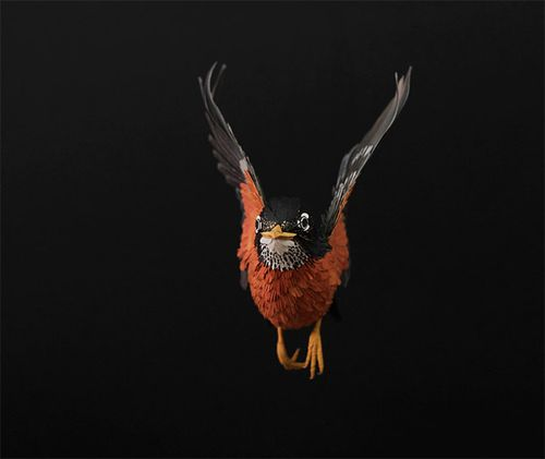 Birds-21