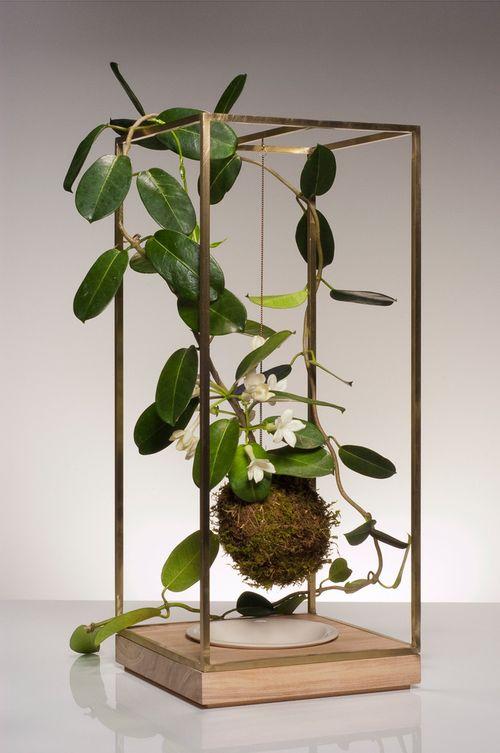 Plant_bondage_brass_wood_jassmine-sm_1024x1024