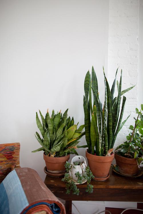 Plantdetail_blog