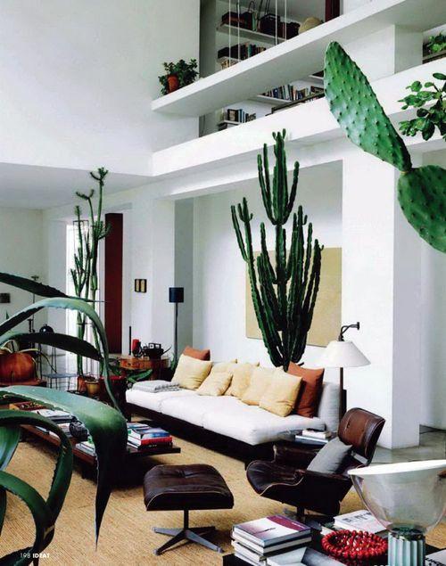 Maurizio-zucchi-cactus-temple-home-4-750x953