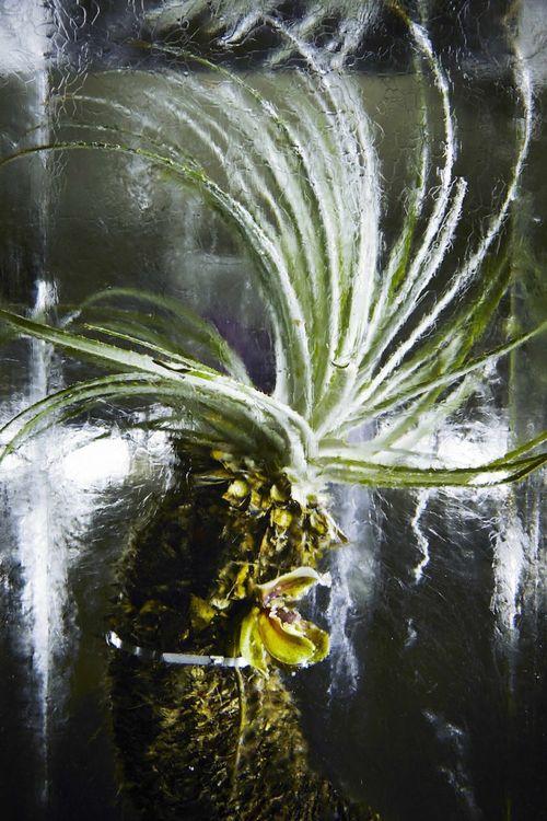 ICED-FLOWERS-10-750x1125