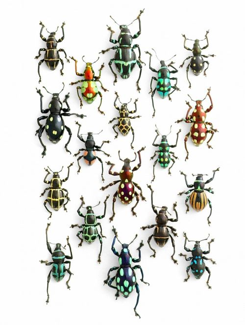 Pheromone-design-christopher-marley-insects-series-1-750x993