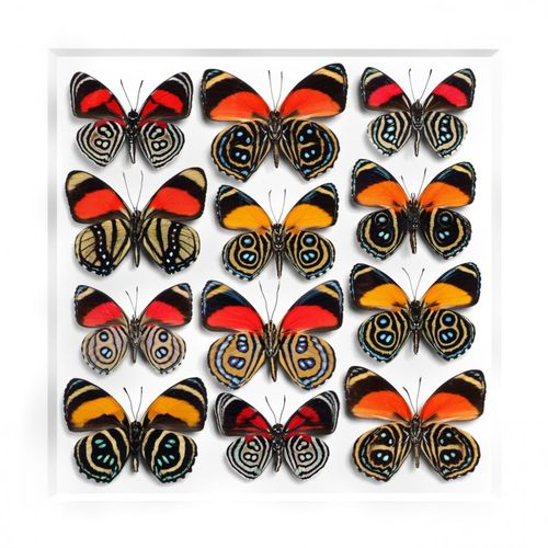 Pheromone-design-christopher-marley-insects-series-4-750x750