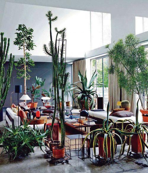 Maurizio-zucchi-cactus-temple-home-3-750x878