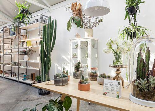 Flo-Atelie-Botanical-shop-by-Epicentro-brazil-04-800x572