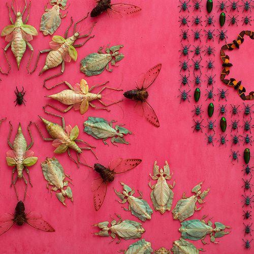 Jennifer-angus-bugs3