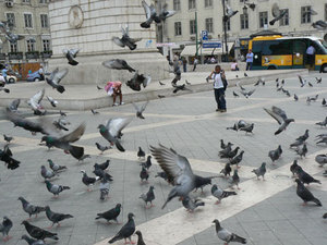 Flyingpigeons_2