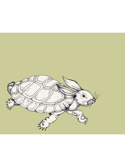 Turtlehare_2